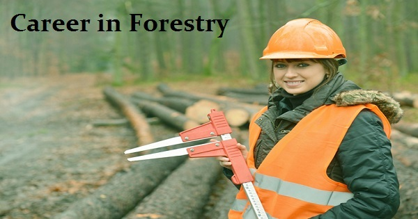 career-in-forestry